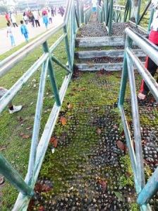 Jembatan refleksi hari ini.Foto: Koleksi Pribadi