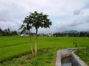 Nun jauh di sana ialah Kantor Camat Kamang Magek, Kabupaten AgamGambar: Milik Sendiri